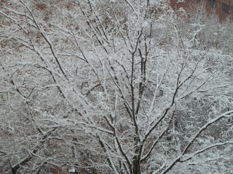 Snow-covered trees in Washington Square Park.