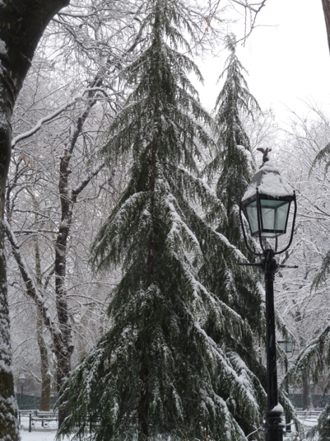 Snow-covered conifers in Washington Square Park.