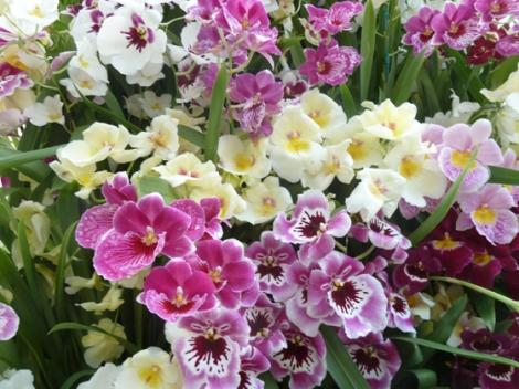 New York Botanical Garden, Orchid Show, Bronx, flowers, Spring, annual