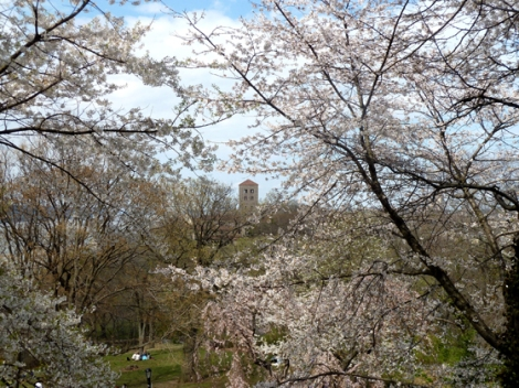 Fort Tryon Park, Hudson River, Manhattan, The Cloisters, Flowering Trees, Metropolitan Museum of Art