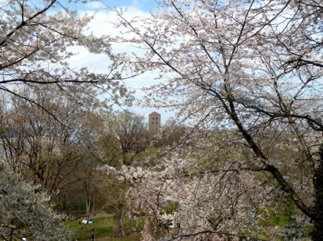 Fort Tryon Park, Hudson River, Manhattan, The Cloisters, Flowering Trees, Metropolitan Museum of Art