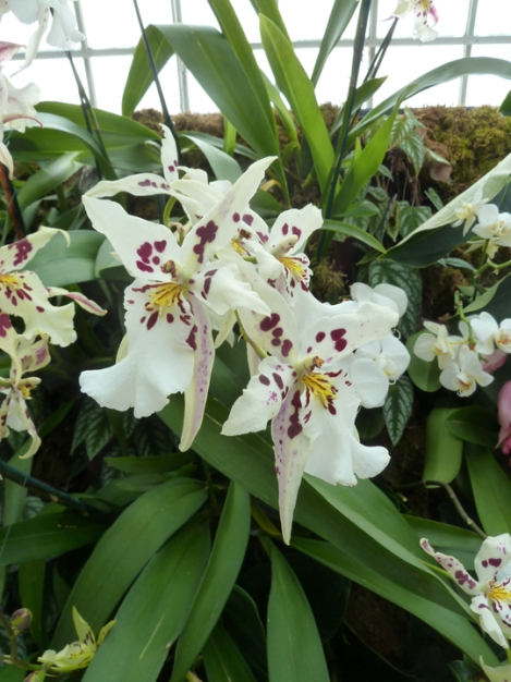 New York Botanical Garden, Orchid Show, Bronx, flowers, Spring, annual