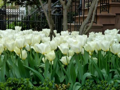 Tulips, Flower, Spring, Sidewalks, New York