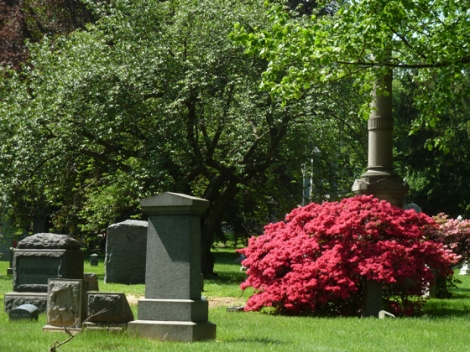 Azalea, Flowers, Green-Wood Cemetery, Cervantes, St Luke's In-The-Field