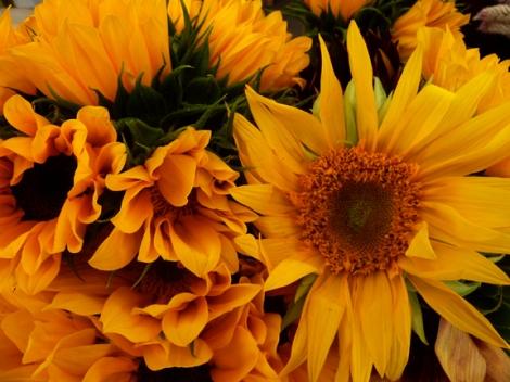 Autumn, Fall, Farmers Market, Union Square, Five Squares and a Circle Tour, Pumpkins, Gourds, Sunflowers, Mums, Autumn Equinox, e.e. cummings, Henry David Thoreau, George Eliot