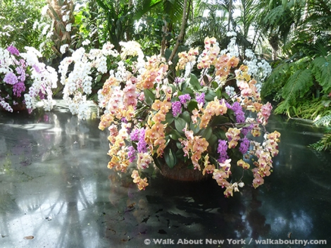 Orchid Show, New York Botanical Gardens, April, Annual, the Bronx, New York, Walk About New York