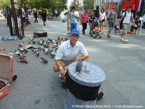 Pigeons, Tina Trachtenburg, Washington Square, Union Square, Felt, Sculptural Art, Rats with Wings, Rats